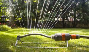 1062925 garden sprinkler 10 Special Needs Activities for the Dog Days of Summer